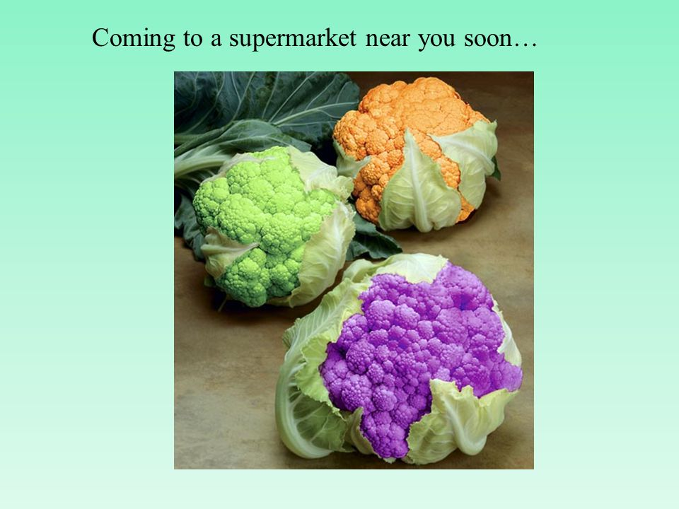 Coming to a supermarket near you soon…