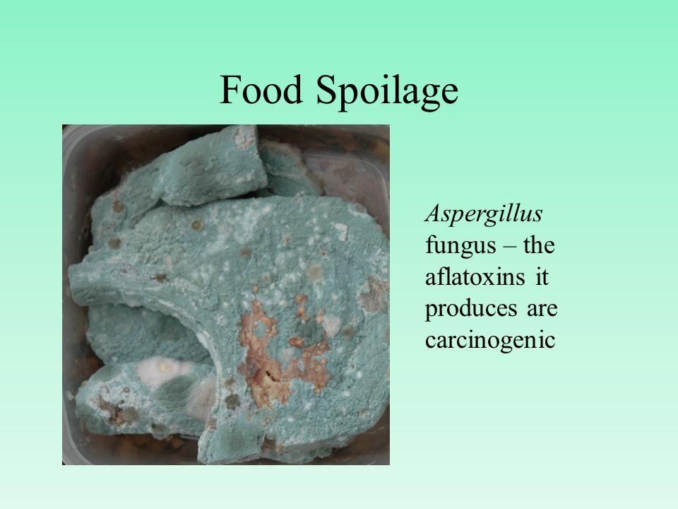 Food Spoilage Aspergillus fungus – the aflatoxins it produces are carcinogenic