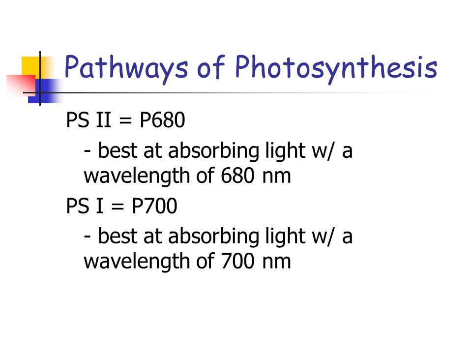 Pathways of Photosynthesis PS II = P680 - best at absorbing light w/ a wavelength of 680 nm PS I = P700 - best at absorbing light w/ a wavelength of 700 nm