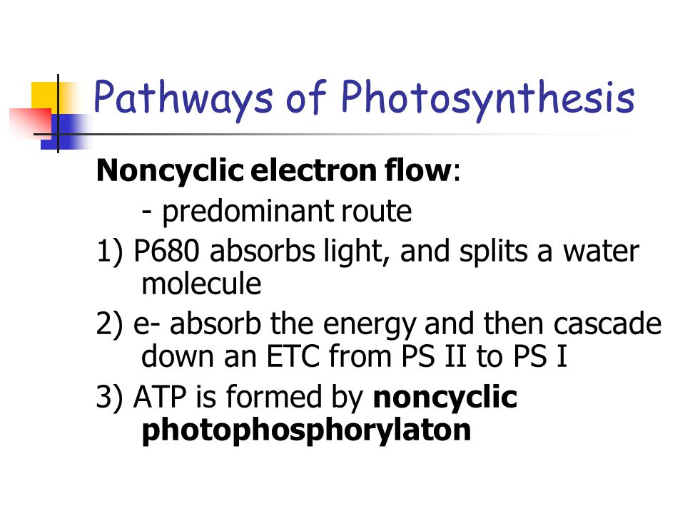 Pathways of Photosynthesis Noncyclic electron flow: - predominant route 1) P680 absorbs light, and splits a water molecule 2) e- absorb the energy and then cascade down an ETC from PS II to PS I 3) ATP is formed by noncyclic photophosphorylaton