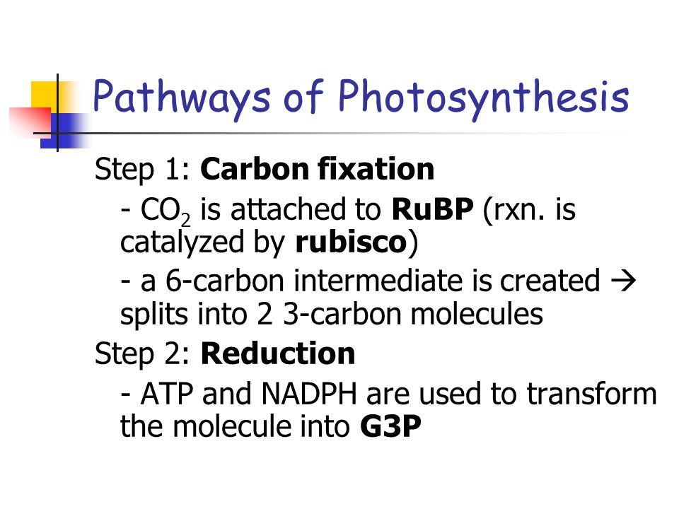 Pathways of Photosynthesis Step 1: Carbon fixation - CO 2 is attached to RuBP (rxn.