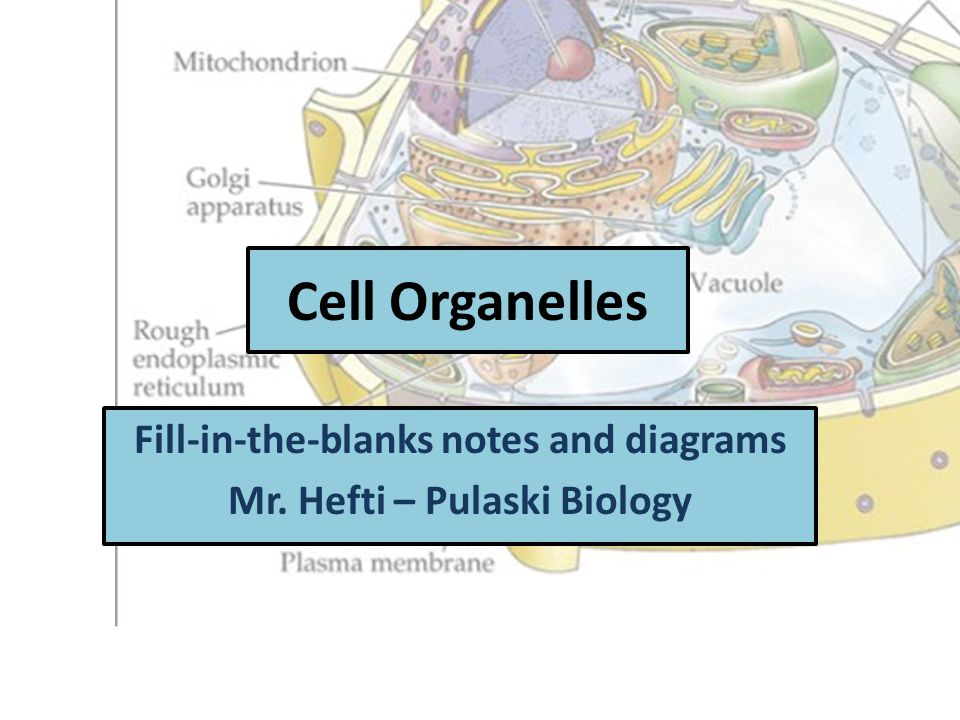 Cell Organelles Fill-in-the-blanks notes and diagrams Mr. Hefti – Pulaski Biology
