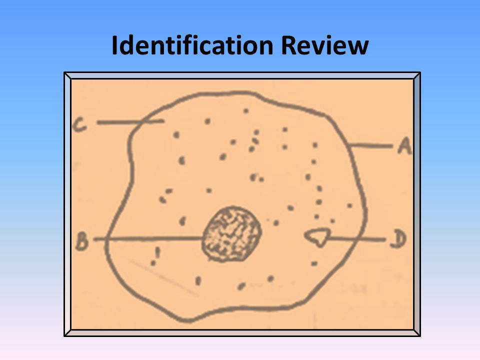 Identification Review