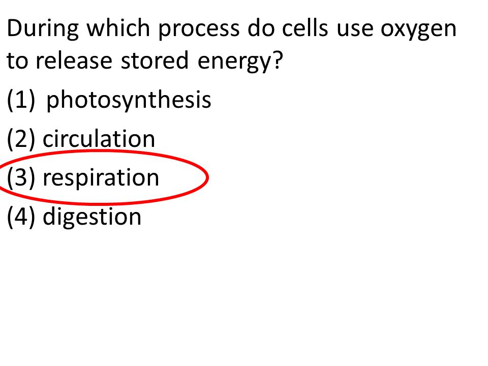 During which process do cells use oxygen to release stored energy? (1)photosynthesis (2) circulation (3) respiration (4) digestion