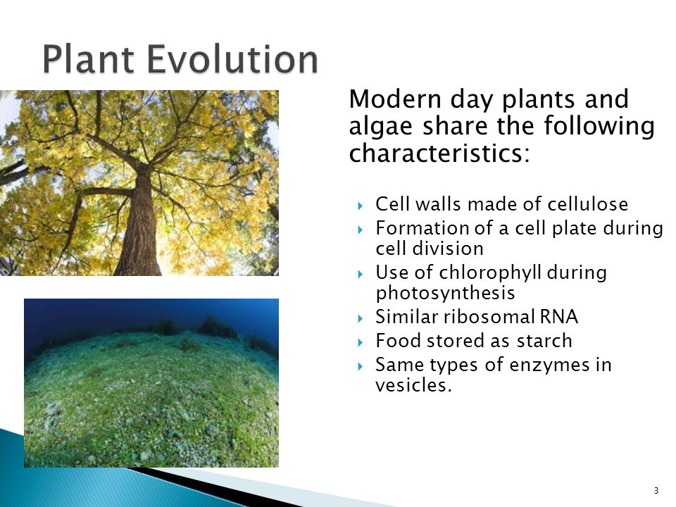 These shared characteristics between plants and algae suggest a common ancestor. 4