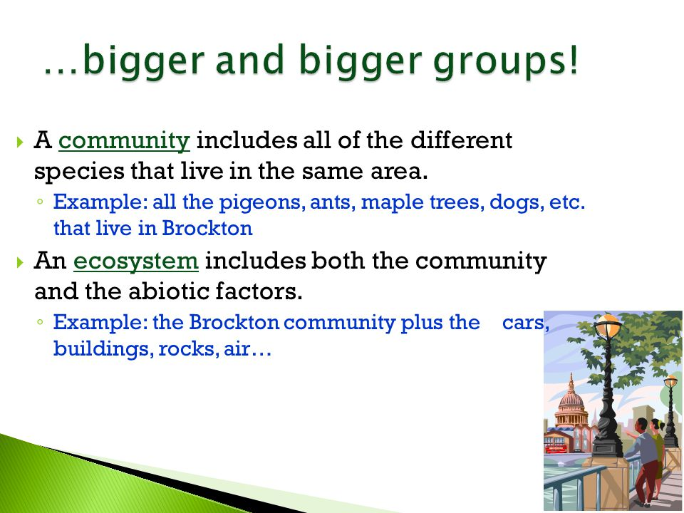  A community includes all of the different species that live in the same area.