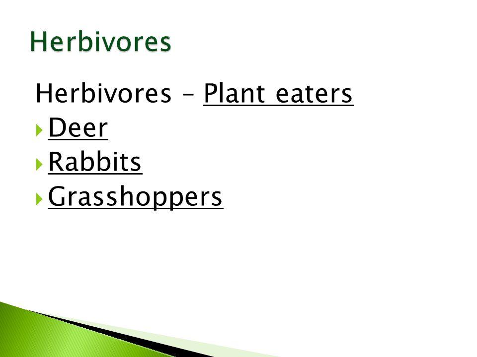 Herbivores – Plant eaters  Deer  Rabbits  Grasshoppers