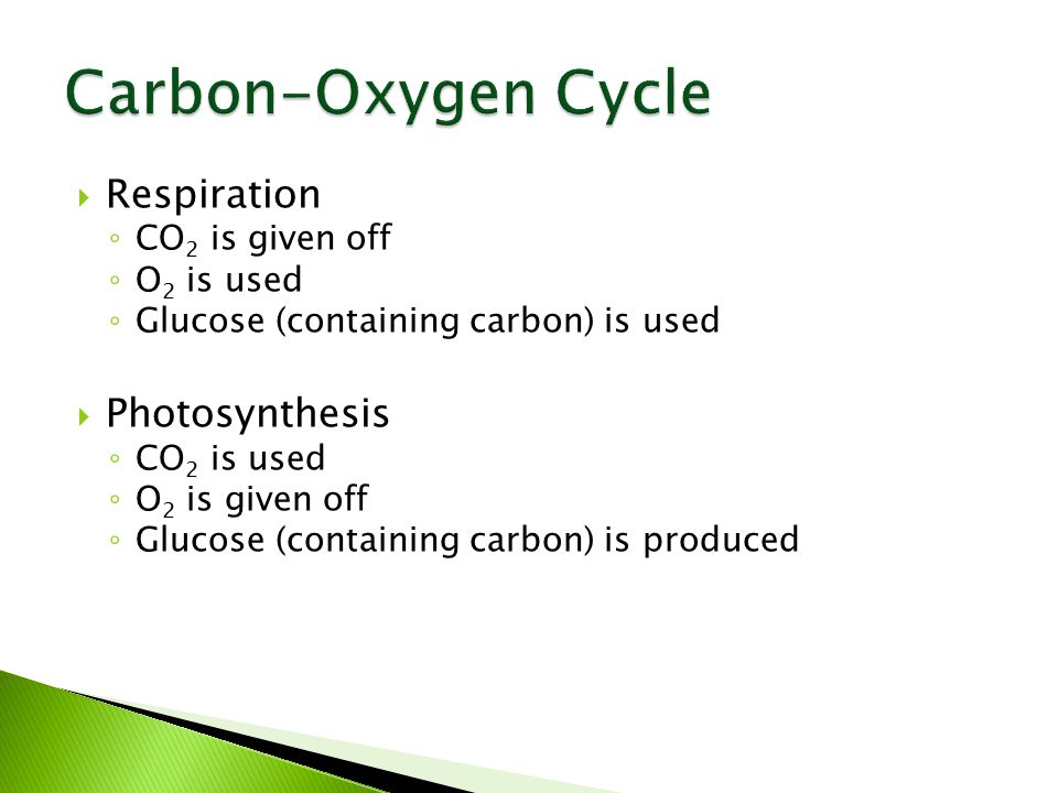  Respiration ◦ CO 2 is given off ◦ O 2 is used ◦ Glucose (containing carbon) is used  Photosynthesis ◦ CO 2 is used ◦ O 2 is given off ◦ Glucose (containing carbon) is produced