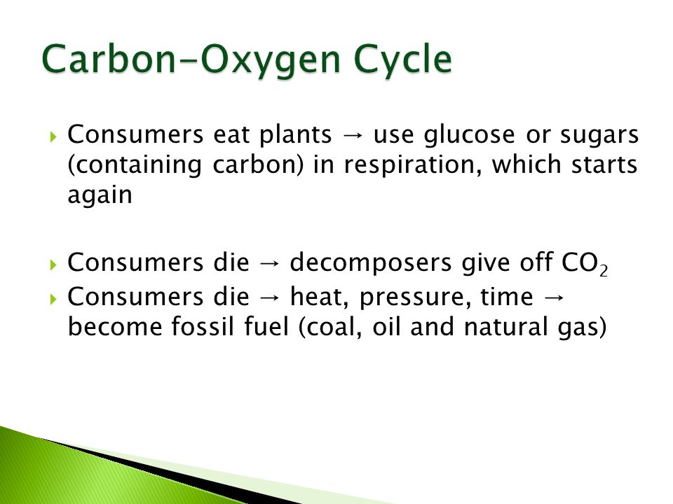  Consumers eat plants → use glucose or sugars (containing carbon) in respiration, which starts again  Consumers die → decomposers give off CO 2  Consumers die → heat, pressure, time → become fossil fuel (coal, oil and natural gas)