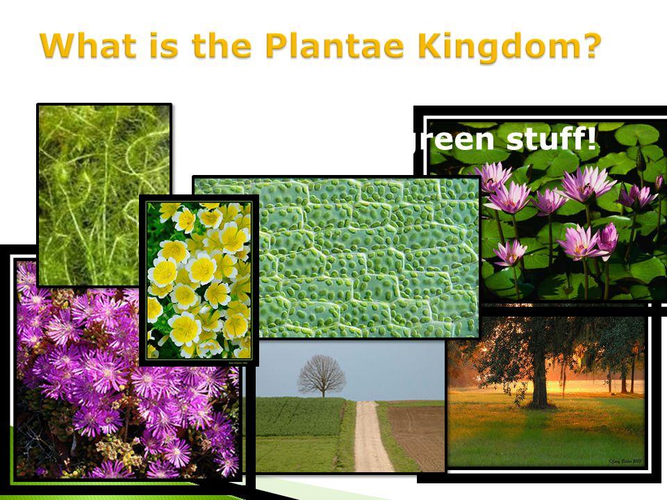 Plants ! The green stuff!