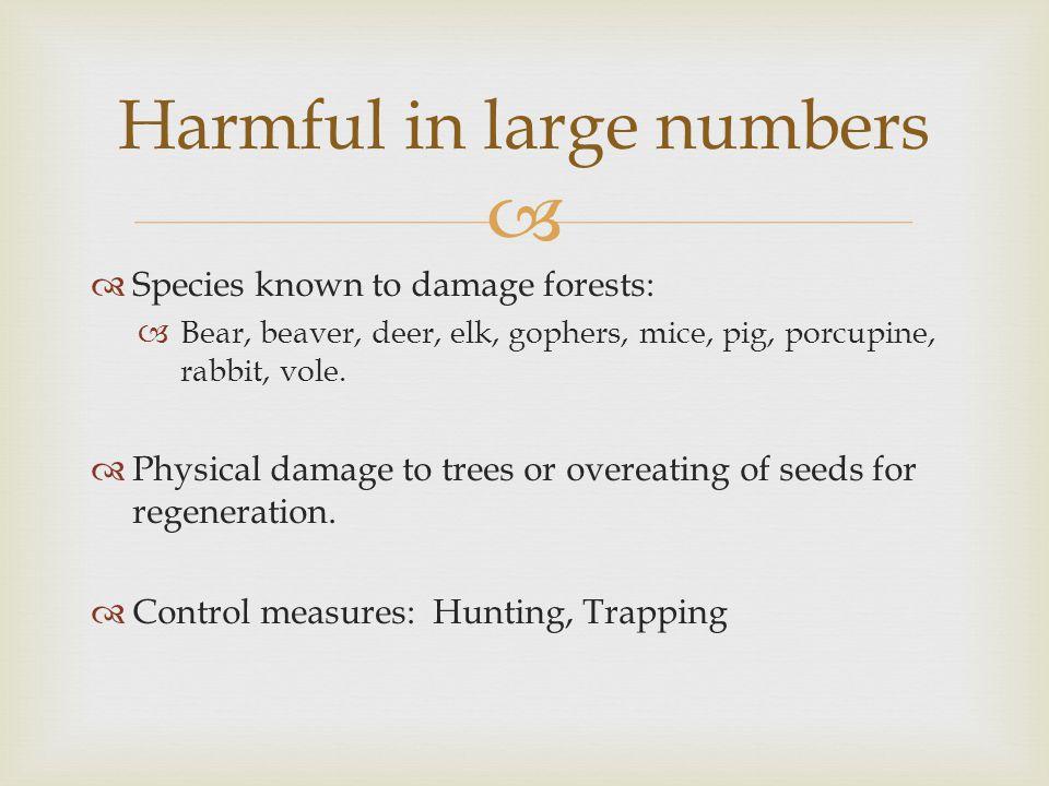   Species known to damage forests:  Bear, beaver, deer, elk, gophers, mice, pig, porcupine, rabbit, vole.