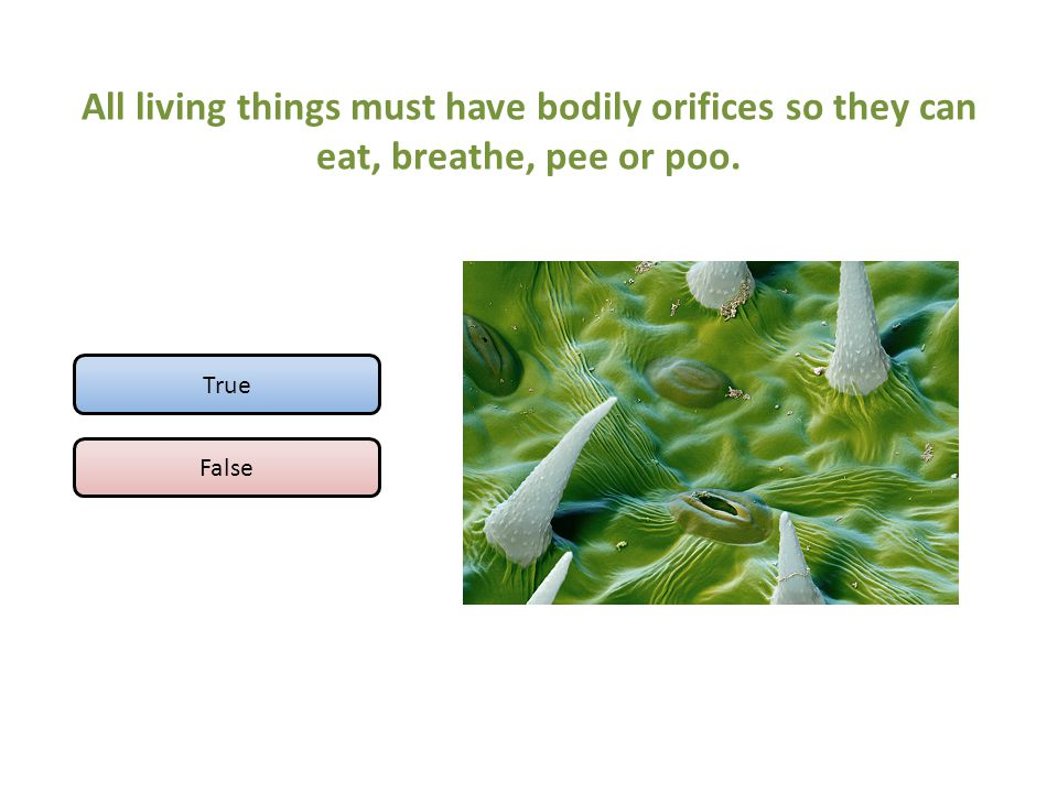 All living things must have bodily orifices so they can eat, breathe, pee or poo. True False