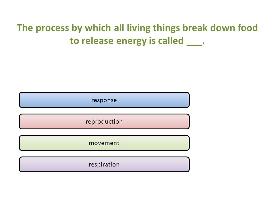 The process by which all living things break down food to release energy is called ___.