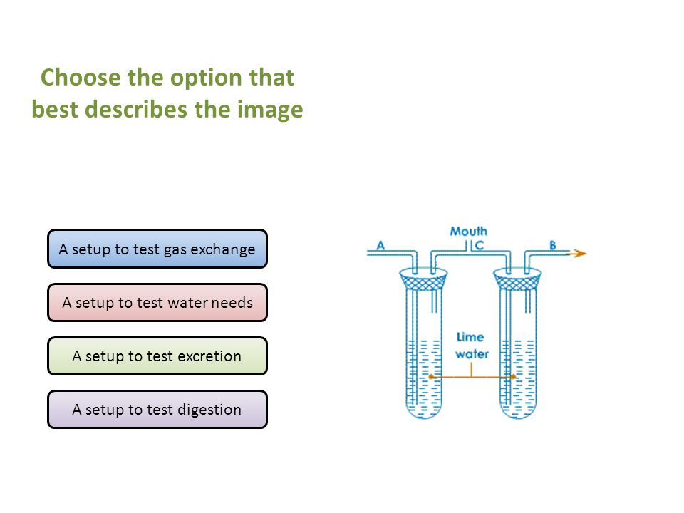 A setup to test gas exchange A setup to test water needs A setup to test excretion A setup to test digestion