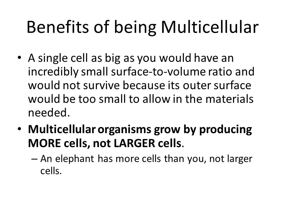 Many kinds of cells Having many different cells that are specialized for specific jobs allows multicellular organisms to perform more functions than unicellular organisms.