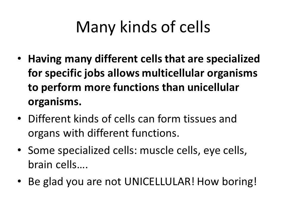 Two types of cells Prokaryotic Cells Also called bacteria World's smallest cells No nucleus Circular DNA (shaped like a rubber band) No membrane-covered organelles Eukaryotic Cells More complex All other cells Have a nucleus Have membrane-covered organelles Linear DNA stored in the nucleus