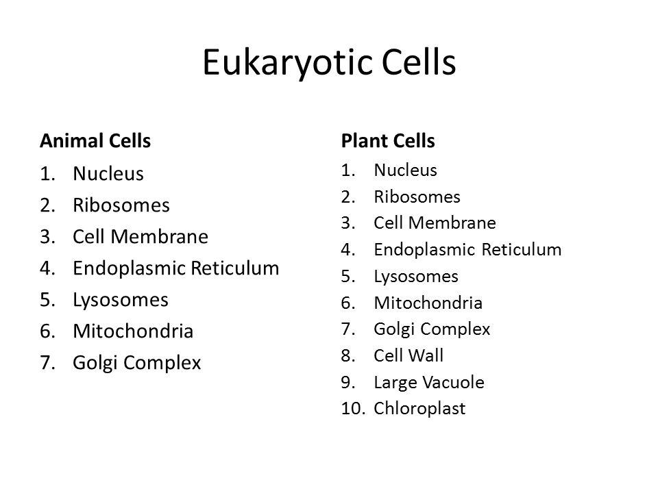 Eukaryotic Cells Animal Cells 1.Nucleus 2.Ribosomes 3.Cell Membrane 4.Endoplasmic Reticulum 5.Lysosomes 6.Mitochondria 7.Golgi Complex Plant Cells 1.N