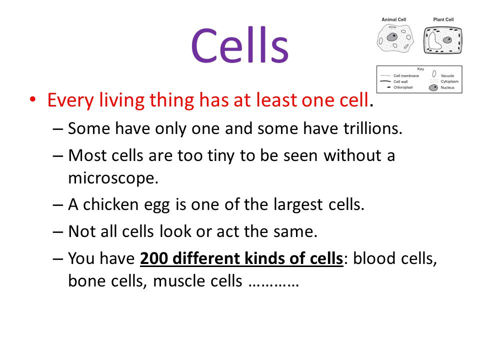 Tissues A tissue is a group of cells working together to perform a specific job in the body.