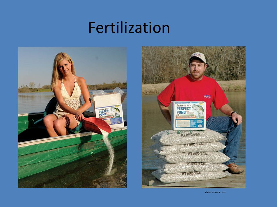 Fertilization alafarmnews.com