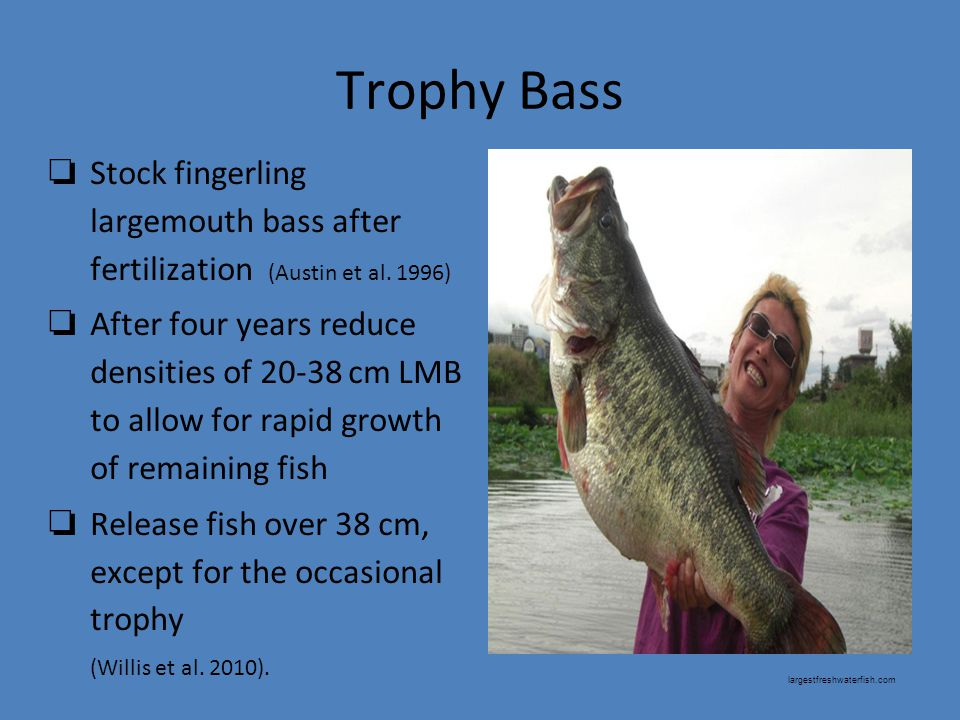 Trophy Bass ❏ Stock fingerling largemouth bass after fertilization (Austin et al.