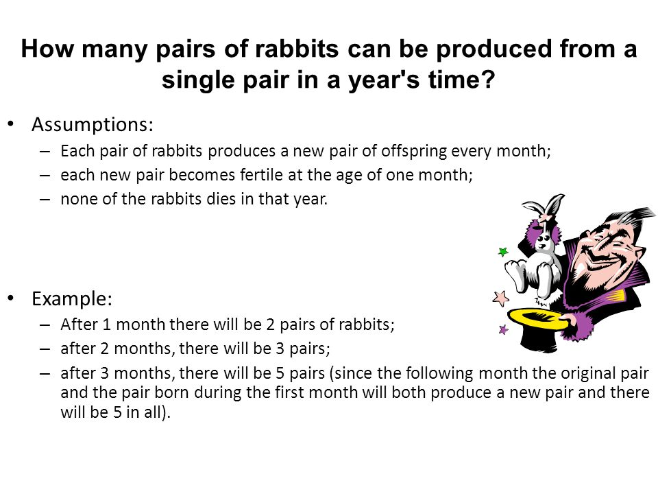 How many pairs of rabbits can be produced from a single pair in a year s time.