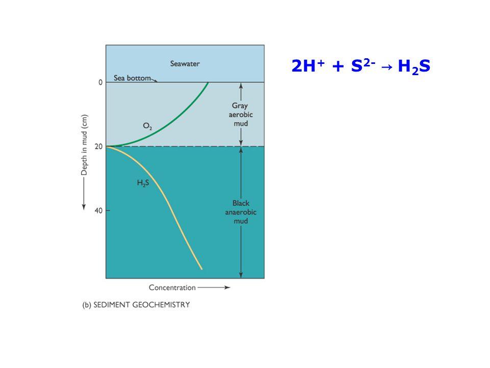 2H + + S 2- → H 2 S