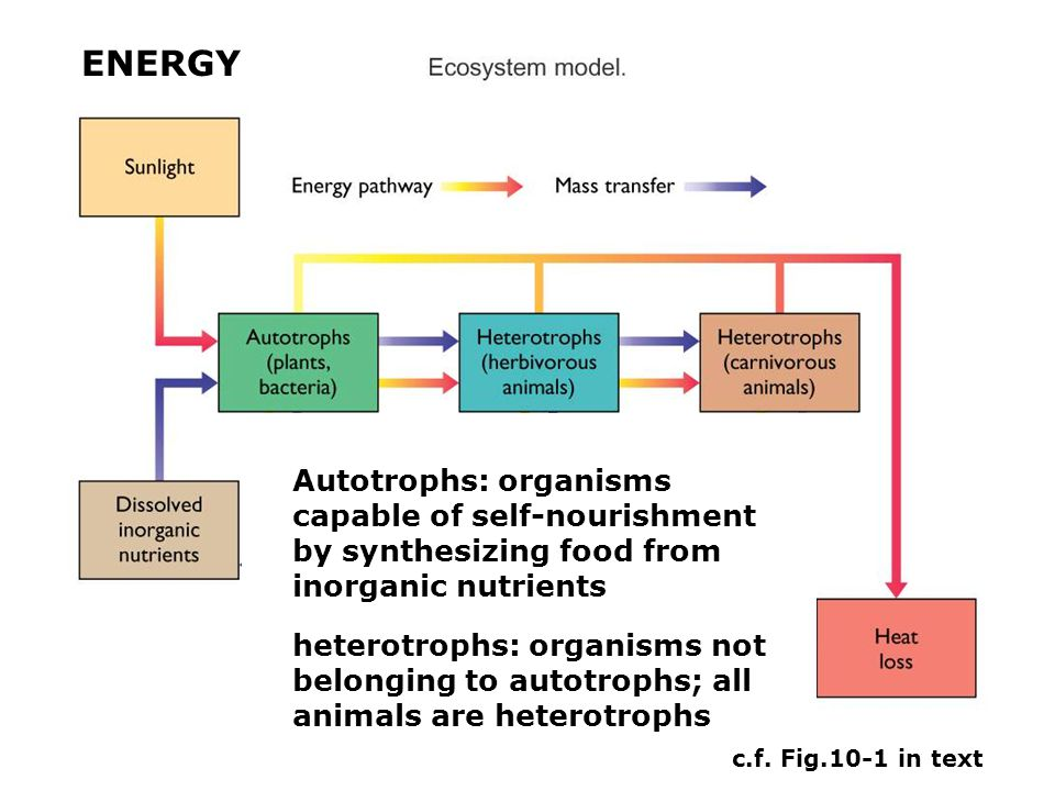 Roles of bacterial in the ecosystem 1.Bacterial decompose dead tissue and release essential inorganic nutrients into the water for recycling by plants.
