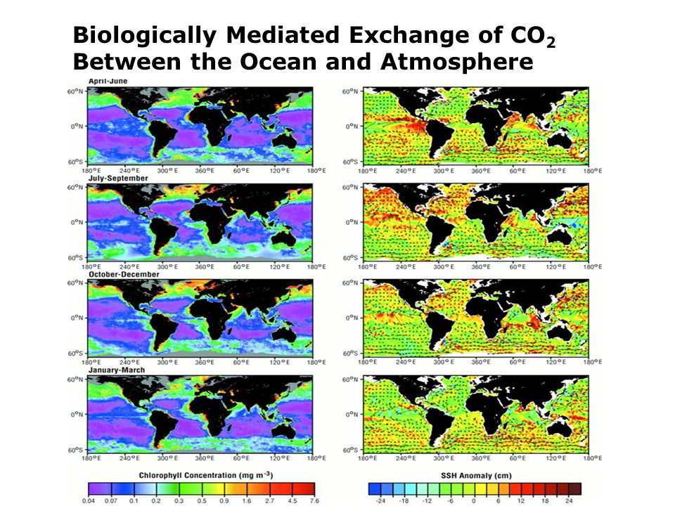 Biologically Mediated Exchange of CO 2 Between the Ocean and Atmosphere