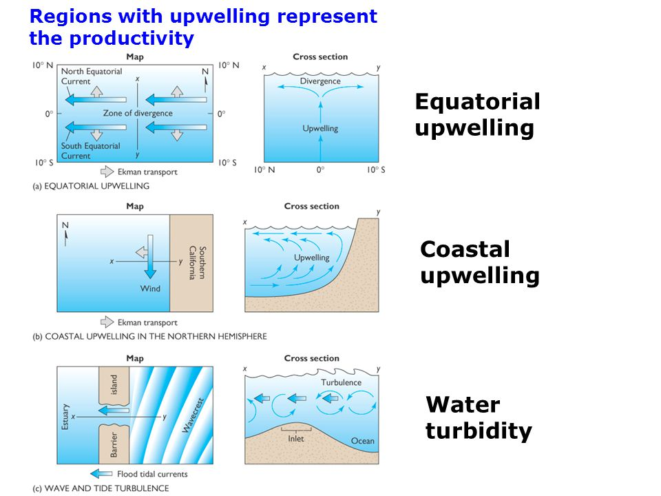 Regions with upwelling represent the productivity Equatorial upwelling Coastal upwelling Water turbidity