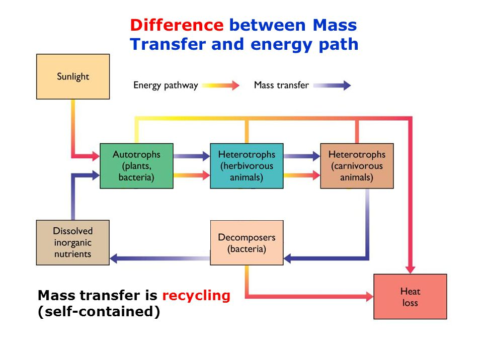 Difference between Mass Transfer and energy path Energy is replenished all the time Physiologic processes