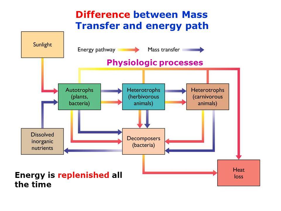 Redfield ratio (stoichiometry) − the molecular ratio of carbon, nitrogen and phosphorus in phytoplankton.