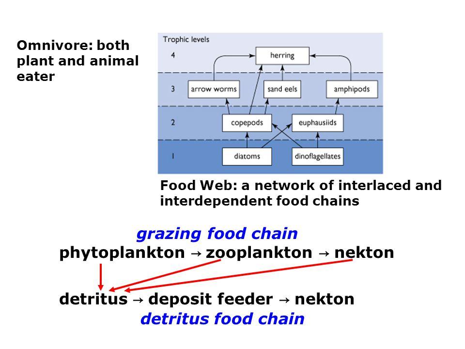 Biologically Mediated Exchange of CO 2 Between the Ocean and Atmosphere