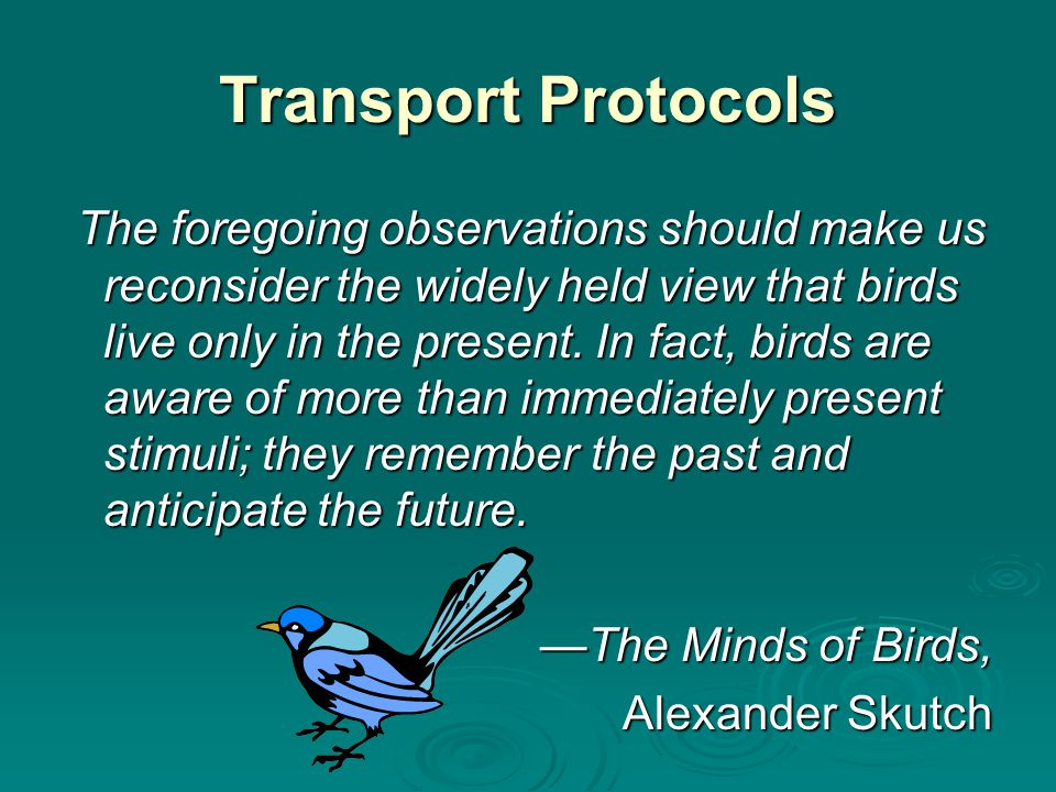 Transport Protocols The foregoing observations should make us reconsider the widely held view that birds live only in the present.
