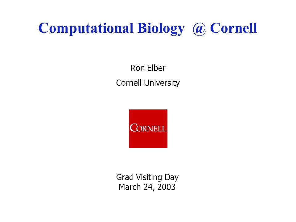 Ron Elber Cornell University Computational Biology @ Cornell Grad Visiting Day March 24, 2003