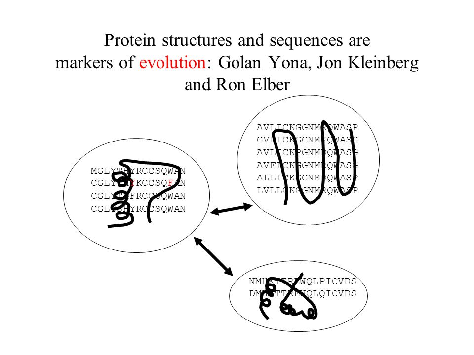 Protein structures and sequences are markers of evolution: Golan Yona, Jon Kleinberg and Ron Elber MGLYTHYRCCSQWAN CGLYTHYKCCSQFAN CGLYTHFRCCSQWAN CGLYSHYRCCSQWAN AVLICKGGNMRQWASP GVLICKGGNMKQWASG AVLICKPGNMDQWASG AVFICKGGNMRQWASG ALLICKGGNMDQWASP LVLLCKGGNMRQWASP NMHKTTREWQLPICVDS DMHKTTREWQLQICVDS