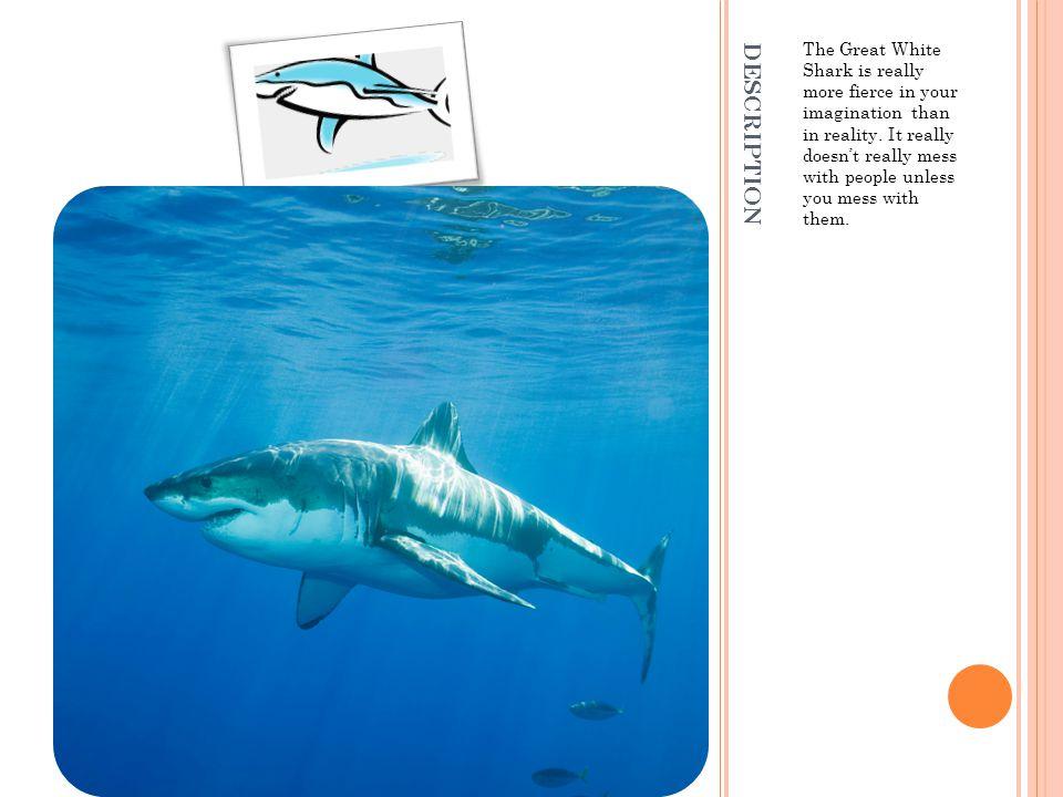 ANATOMY A.Big fierce B.big fierce teeth (3,000) the great white shark.