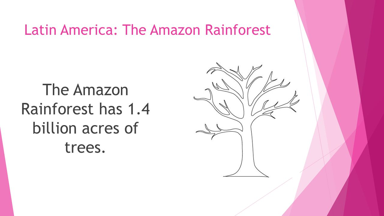 Latin America: The Amazon Rainforest The Amazon Rainforest has 1.4 billion acres of trees.