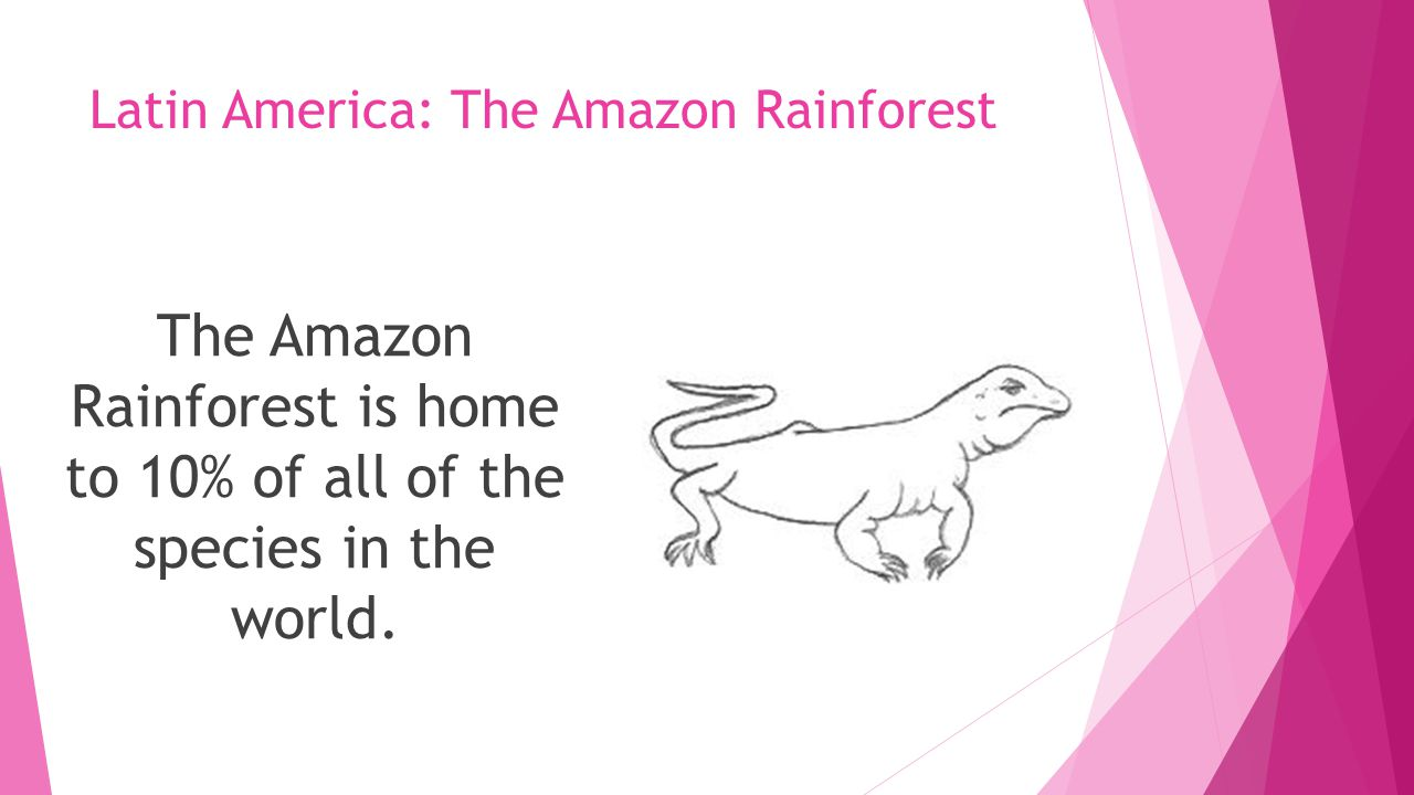 Latin America: The Amazon Rainforest The Amazon Rainforest is home to 10% of all of the species in the world.