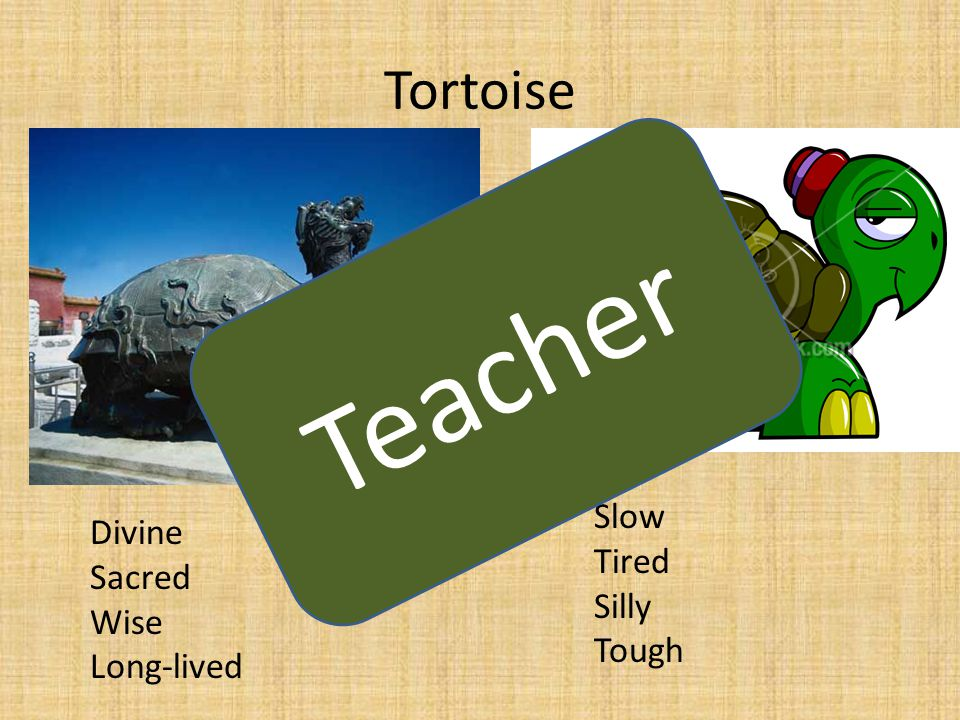 Tortoise Slow Tired Silly Tough Divine Sacred Wise Long-lived Teacher