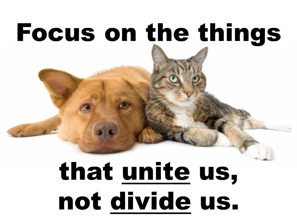 Focus on the things that unite us, not divide us.