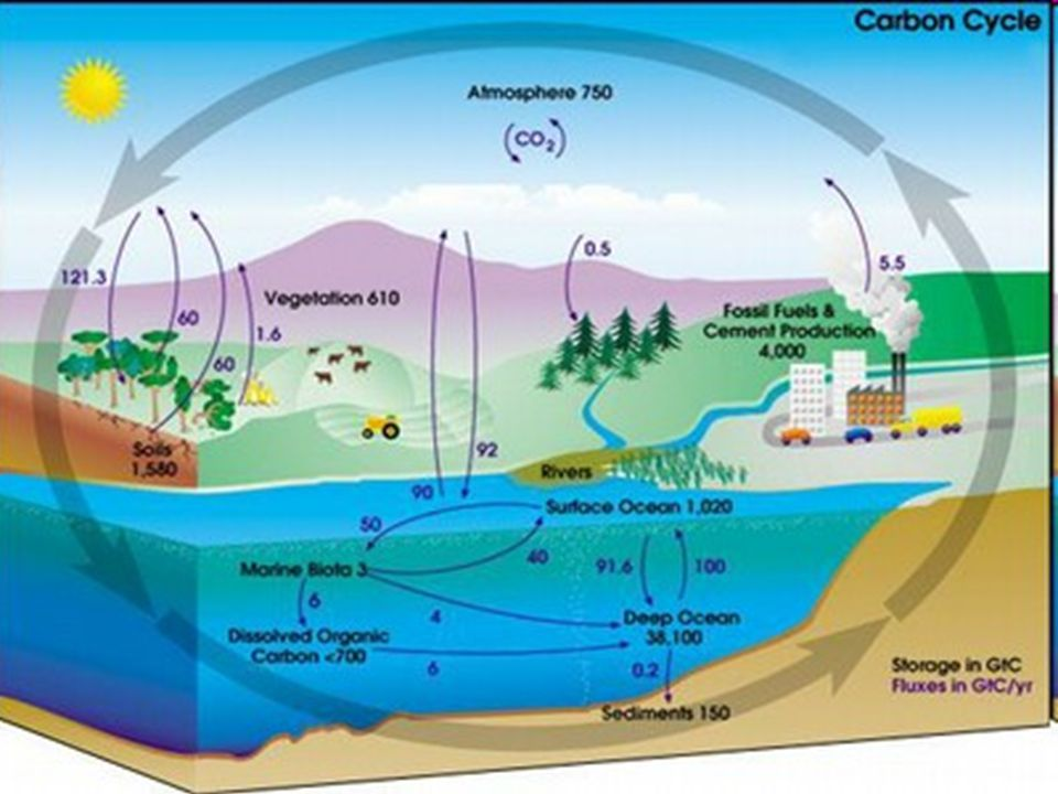Natural and Anthropogenic Contributions to the Carbon Cycle Global Environmental Issues and Policies and Economic Consequences