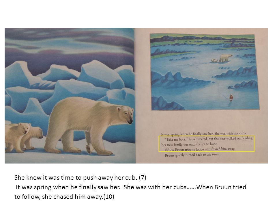 She knew it was time to push away her cub. (7) It was spring when he finally saw her. She was with her cubs……When Bruun tried to follow, she chased hi