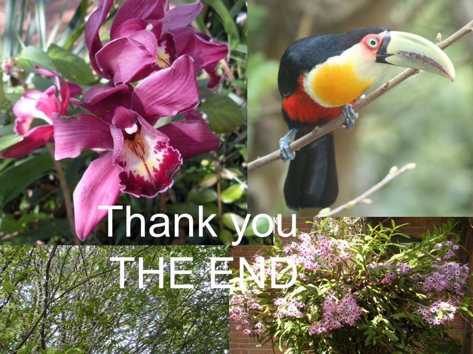 Thank you THE END 39