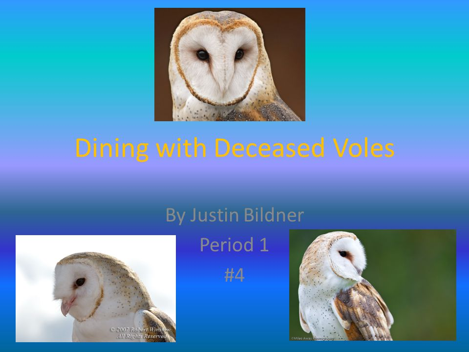 Dining with Deceased Voles By Justin Bildner Period 1 #4