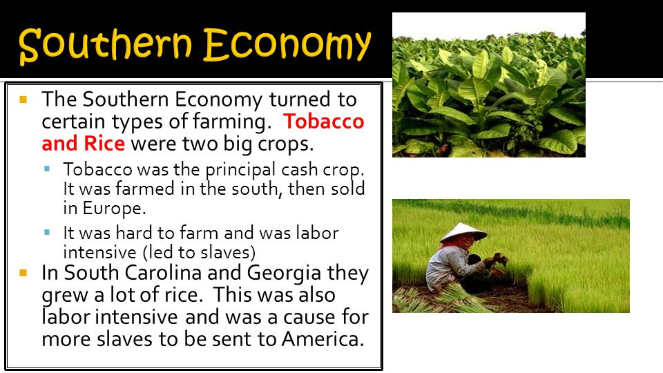  The Southern Economy turned to certain types of farming.