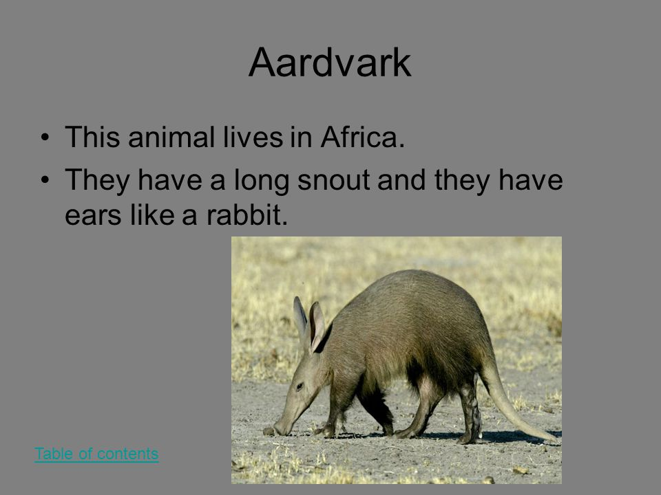 Aardvark This animal lives in Africa. They have a long snout and they have ears like a rabbit. Table of contents
