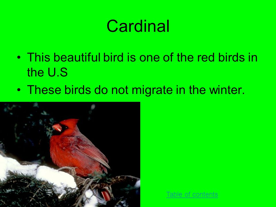 Cardinal This beautiful bird is one of the red birds in the U.S These birds do not migrate in the winter. Table of contents