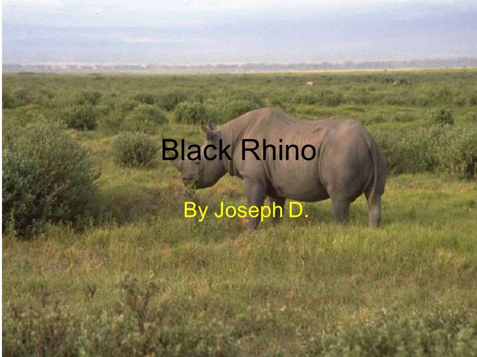 Black Rhino By Joseph D.
