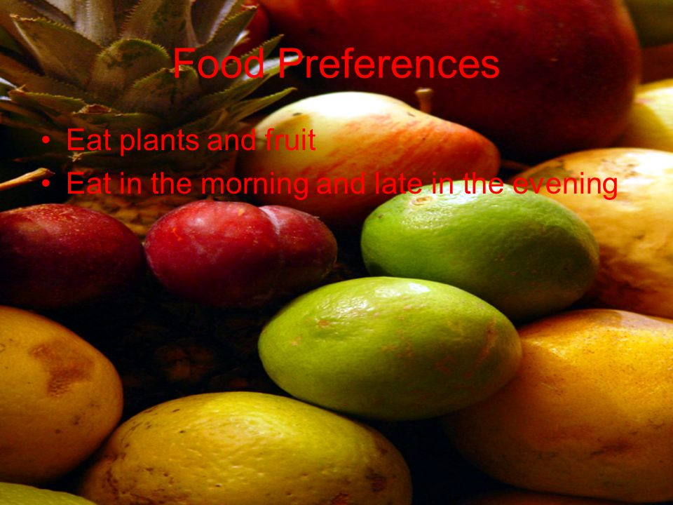 Food Preferences Eat plants and fruit Eat in the morning and late in the evening