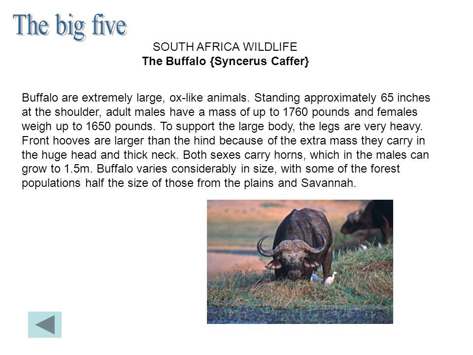 On trouve beaucoup d'animaux sauvages en Afrique du Sud, et ce, depuis très longtemps.